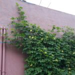 Plant Support Netting 3x1.5 meter