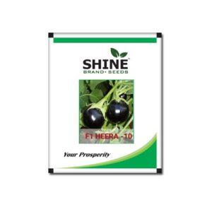 Brinjal F1 Hybrid Heera 10 -Shine brand seeds