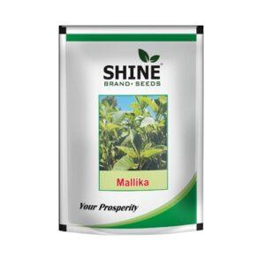 Amaranthus (Green) Mallika - OP Shine brand seeds