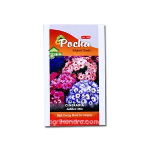 Cineraria Jubliee Mix - Pocha Seeds