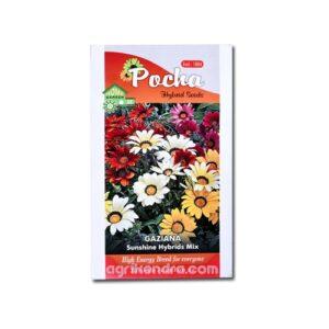 Gazania Sunshine Hybrids - Pocha Seeds