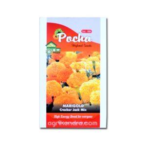Marigold Cracker Jack Orange - Pocha Seeds
