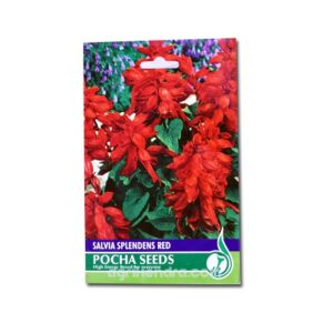 Salvia Splendens Red – Demand Agro Seeds