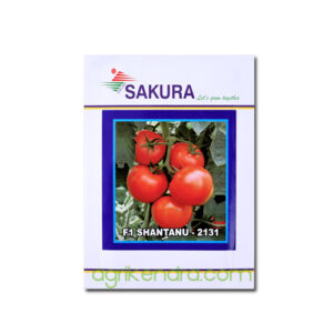 Tomato F1 Shantanu-2131- Sakura Seeds