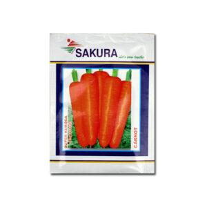 Carrot Kuroda Imported - Sakura Seeds