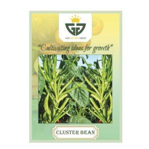 Cluster Beans(OP) - Gro Golden Seeds