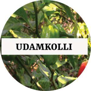 Udamkolli Chilli (OP) - Kerala Local