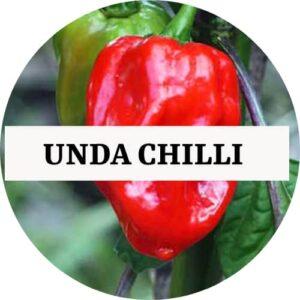 Unda Chilli (OP) - Kerala Local