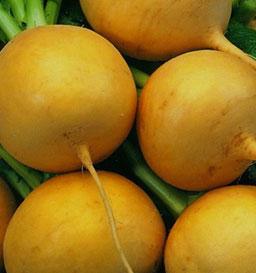 Turnip Golden Ball - Pandit Seeds