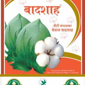 Cotton Hybrid Seeds Badshah