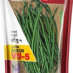 Cow Pea / LOBIA VU -5 - Ankur Seeds