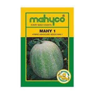 Ash Gourd MAHY-1 - Mahyco Seeds